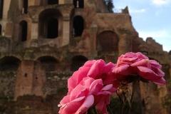 Parco-Archeologico-del-Colosseo-la-Domus-Tiberiana